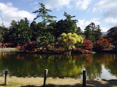 Mùa lá đỏ và phong tục ngắm lá đỏ của người Nhật